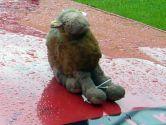 Ein Kamel - das Maskottchen des Teams - im Regen!